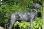 Pies z Castro Laboreiro