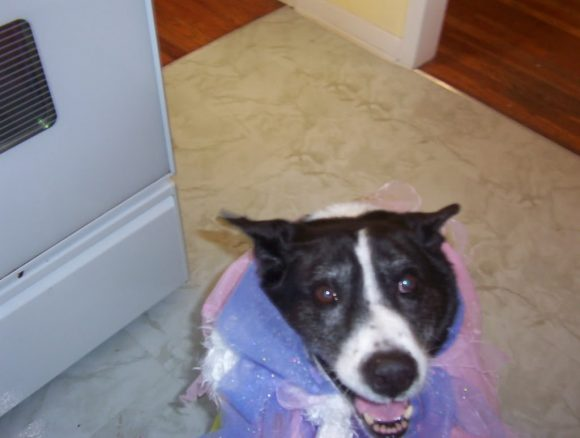 Funny dog with boa